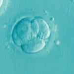 Mosaic Embryos