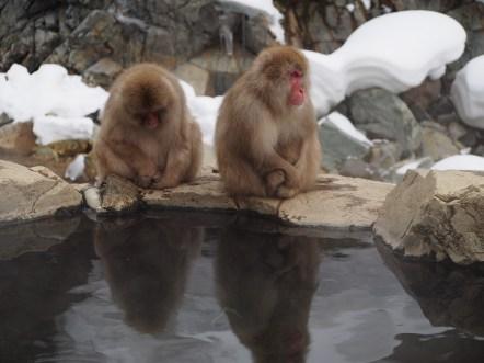 Macaques, Jigokudani, Japan