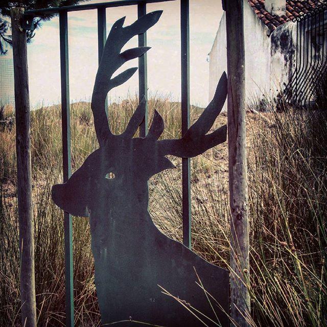 #veado #deer #tapadademafra