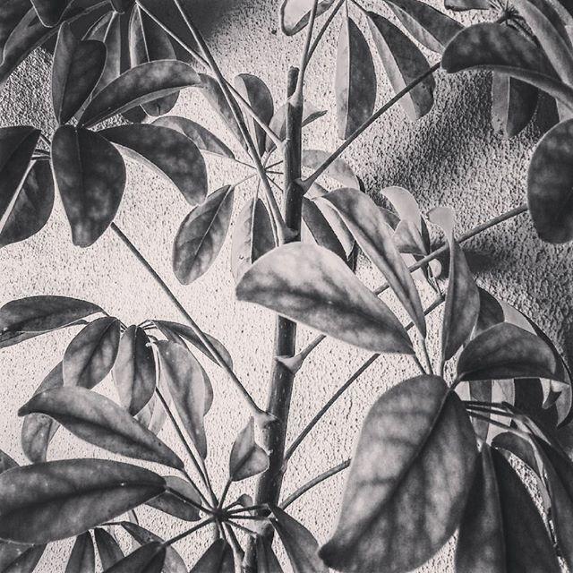 #blackandwhite #flower #brokenlove