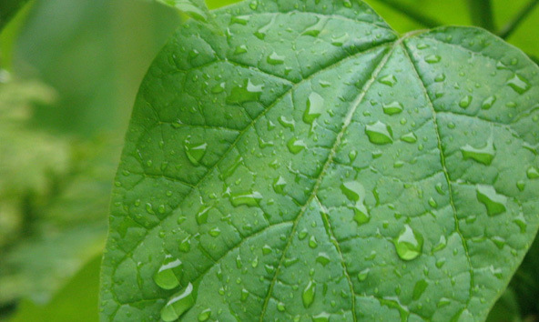 TIps to Cool Your Home Naturally