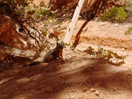 Bryce Canyon, 2018