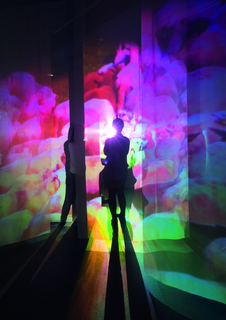 MCA - Pipilotti Rist - Administrating Eternity - 2011 (3) (HighRes).jpg