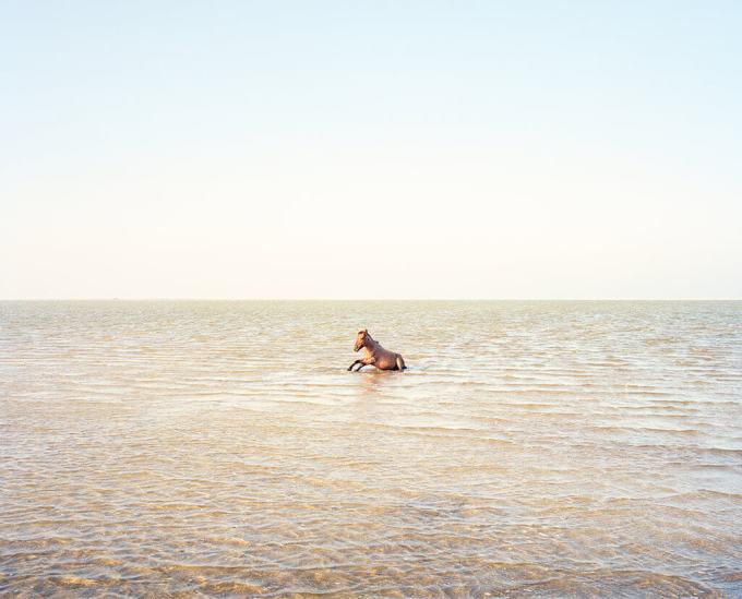 Sea-Horse-1024x827.jpg