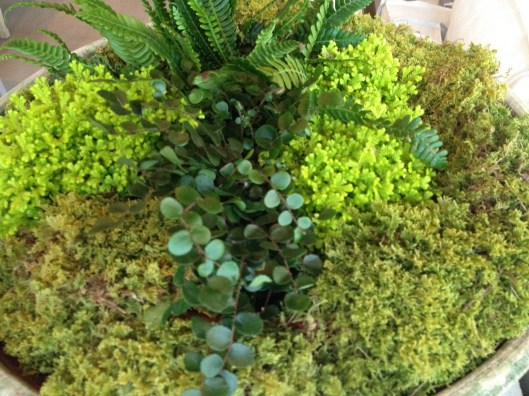 alococer aged terra cotta planting with moss and fern collection