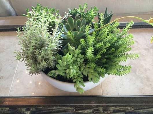 one can never have enough succulents (or green)....we love the light frosty green + chartreusey green combination with 'the greys'