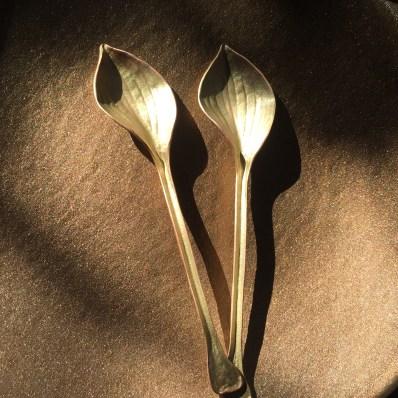 hosta sm gold spoon
