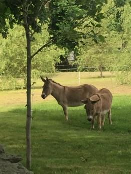 ww-donkey-newport-artefacthome