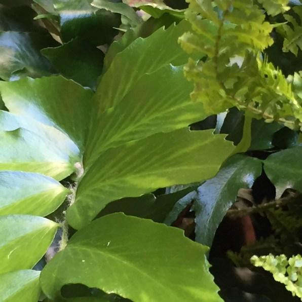 courtyard-texture-2-isabella-stewart-gardner