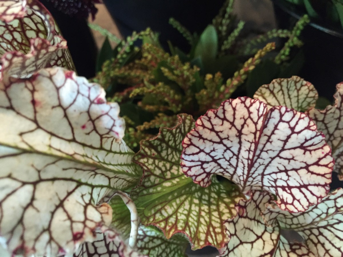 floral-in-the-shop-artefacthome-june-4