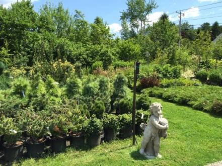snugharbor-evergreen-1