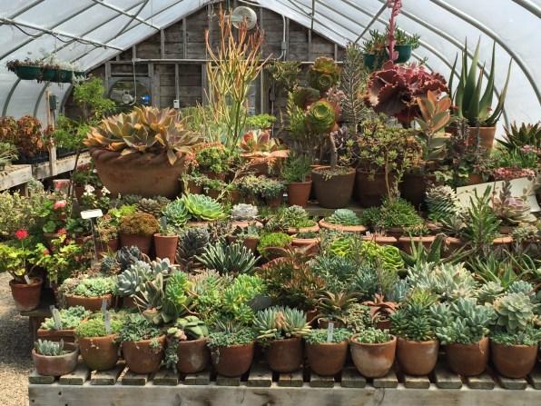 snugharbor-succulents-14