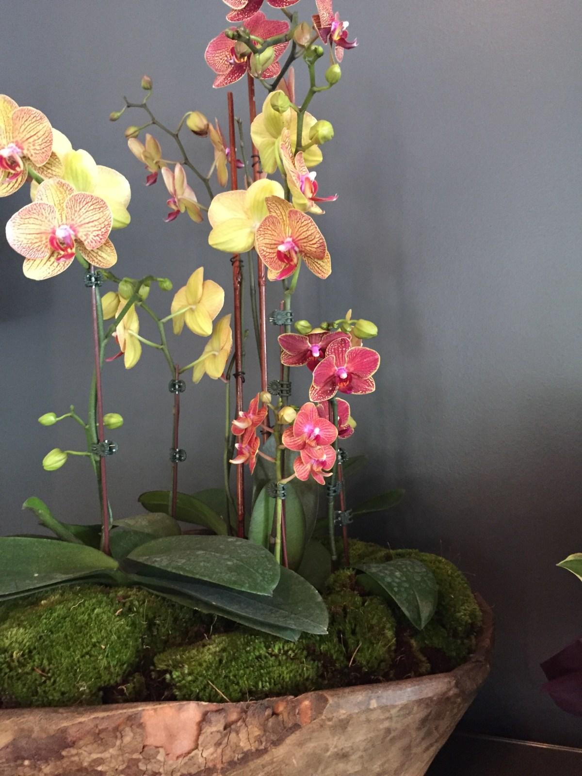con-orchidbowl1-artefacthome