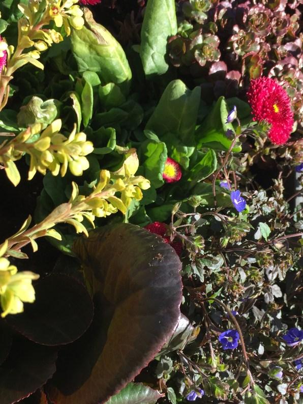 container-drsarah-spring2016-5