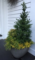 evergreen-mix-front-entrance-winter-2016-marypf-1