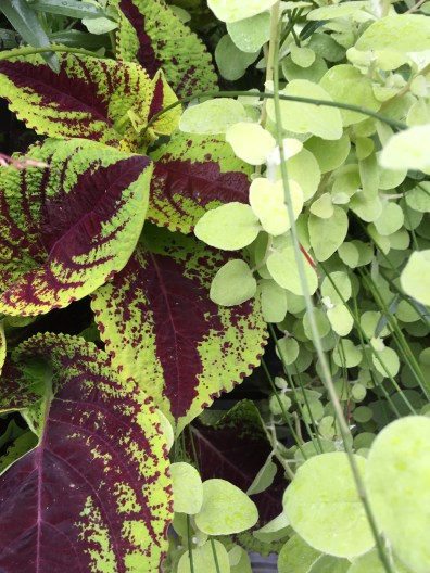 soho-planter-october-1