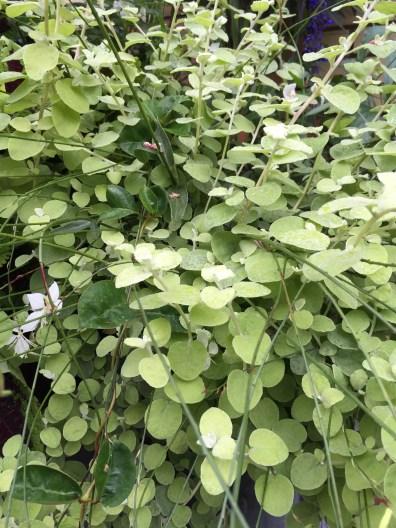 soho-planter-october-3