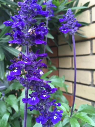 soho-planter-october-4