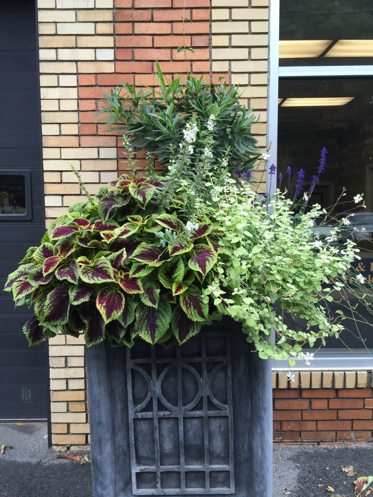 soho-planter-october-5