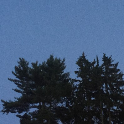 whitehall-inn-maine trees 1