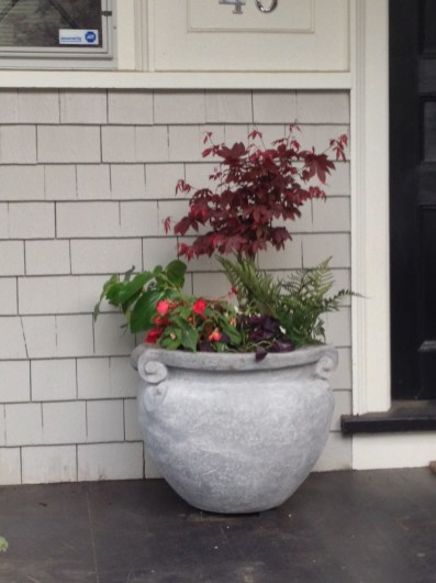 japanese maple and underplanting-olive jar-pennoyer newman@artefacthome