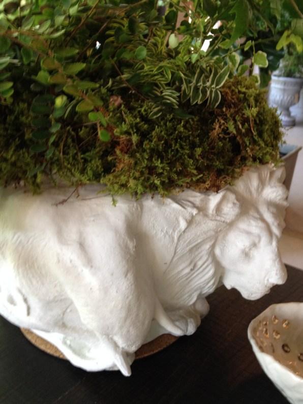 safari pot-fern@artefacthome