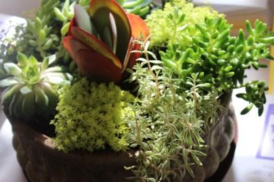 succulent-trojan planter-campo de fiori@artefacthome