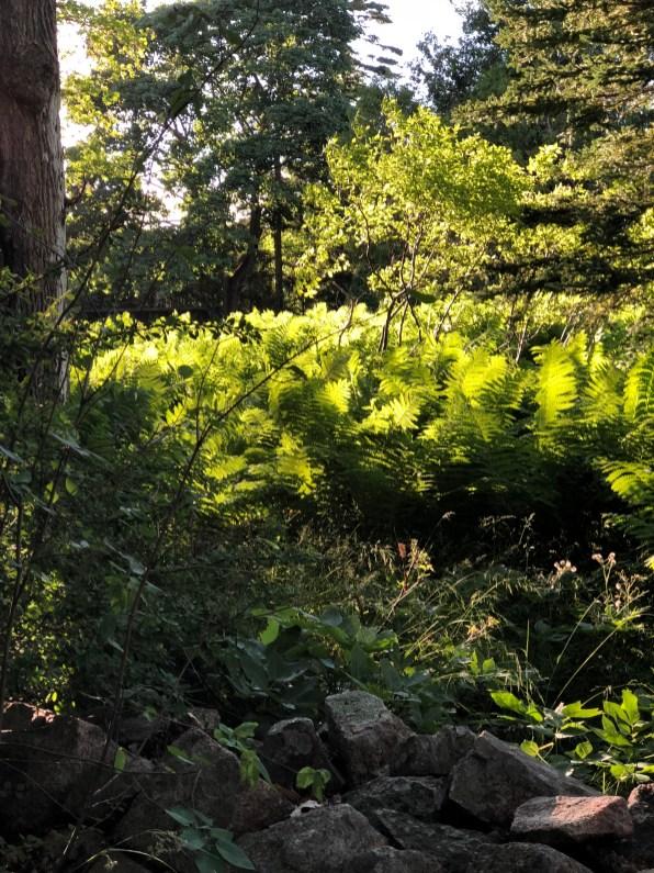 bar harbor-field of ferns 1