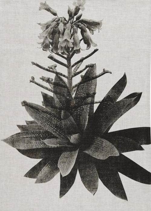 tablesetting-zen summer-rare garden-artefactboston