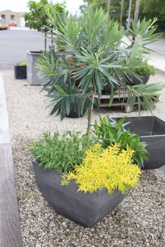charcoal composite planters - stunning with green!