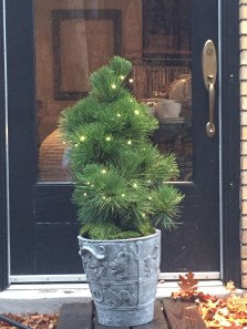 pennoyer newman planters are perfect for use indoors (but durable enough to stay out year round) - we have pots and 'city trees' (live trees, lights on a small scale).
