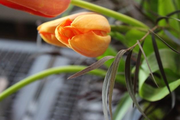 french-tulip-hot-dark-1-artefacthome