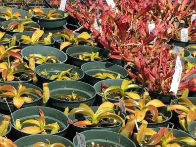 snugharbor-succulents-15