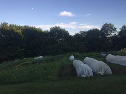 primo-upper garden 2
