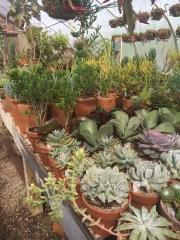 snug harbor succulent 13