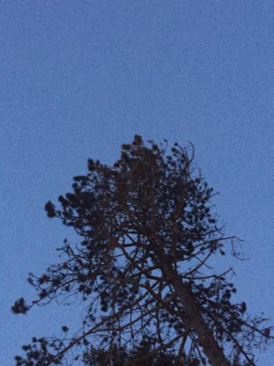 whitehall-inn-maine trees 3