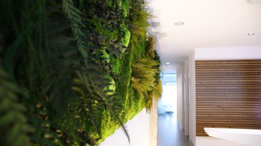 Muro vegetal interior