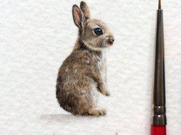 dibujo conejo