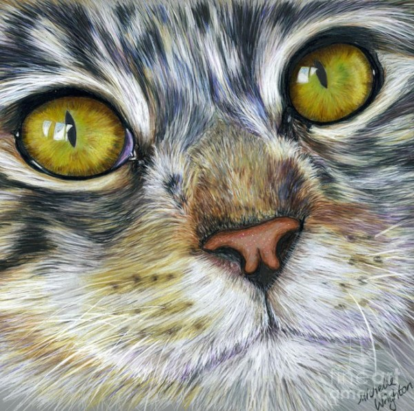 15-cat-color-pencil-drawing-michelle.preview
