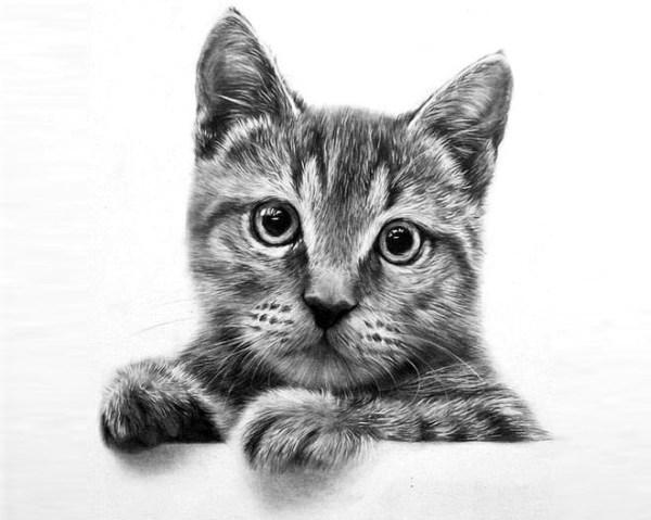 2-cat-drawing
