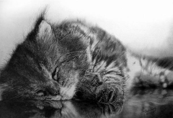 paul-lung-cat-drawings-3