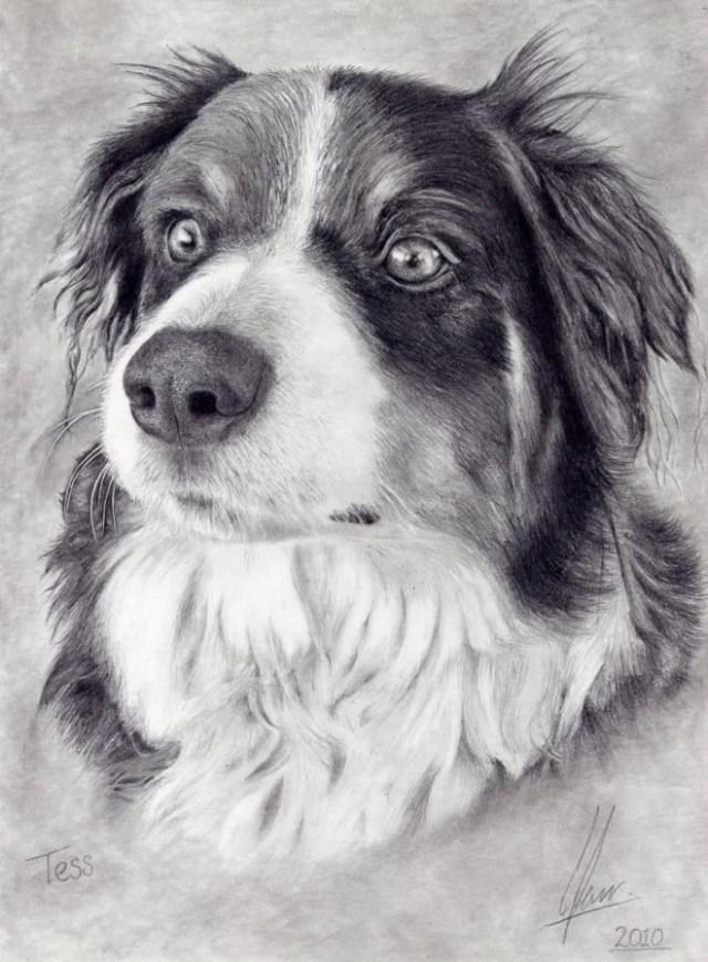 DIbujo perro blanco y negro 1