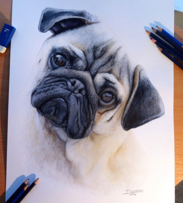 DIbujo perro hiperrealista colores 4