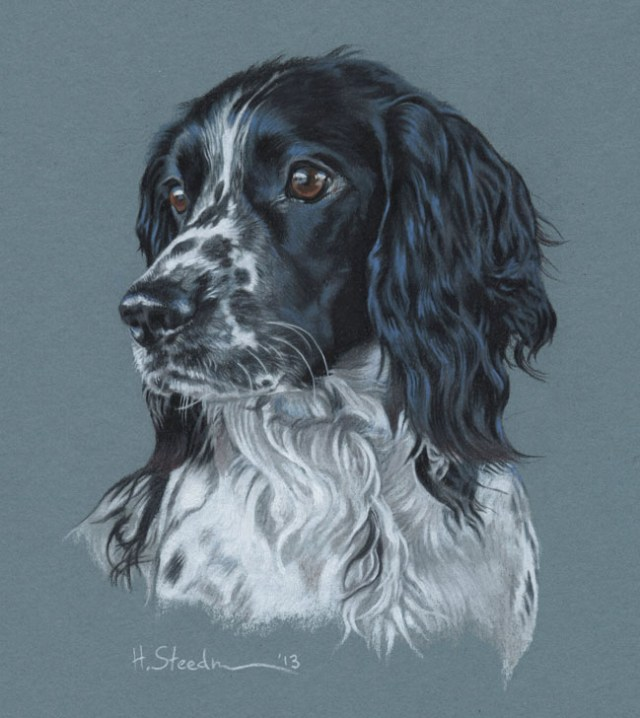 DIbujo perro realistas colores 2
