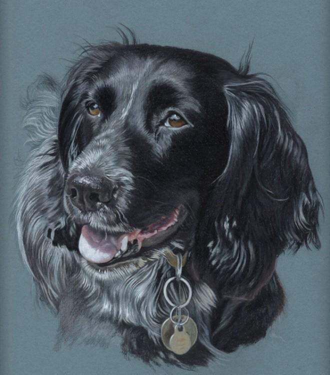 DIbujo perro realistas colores