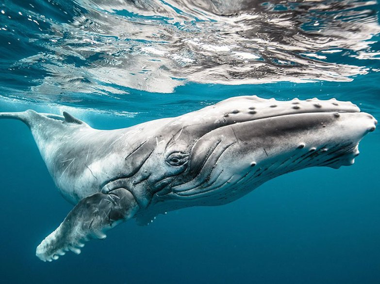 mejores fotos National Geographic 2015 12