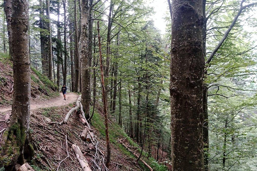 Ci ispiriamo al Parco Nazionale delle Foreste Casentinesi
