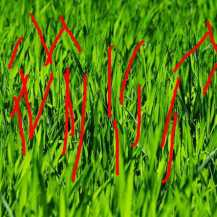 thumb2-4k-green-grass-texture-lawn-spring-macr