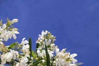16_flowers