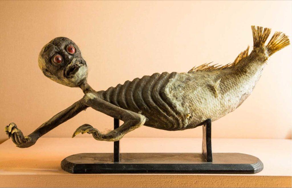 Chimera do Museu de História Natural de Veneza. gabinete de curiosidades
